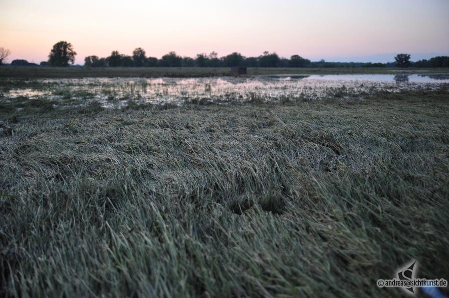 hochwasser-einsatz-gruna-2013-080