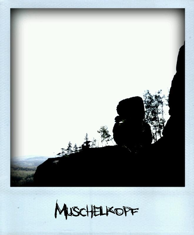 25157444-Muschelkopf