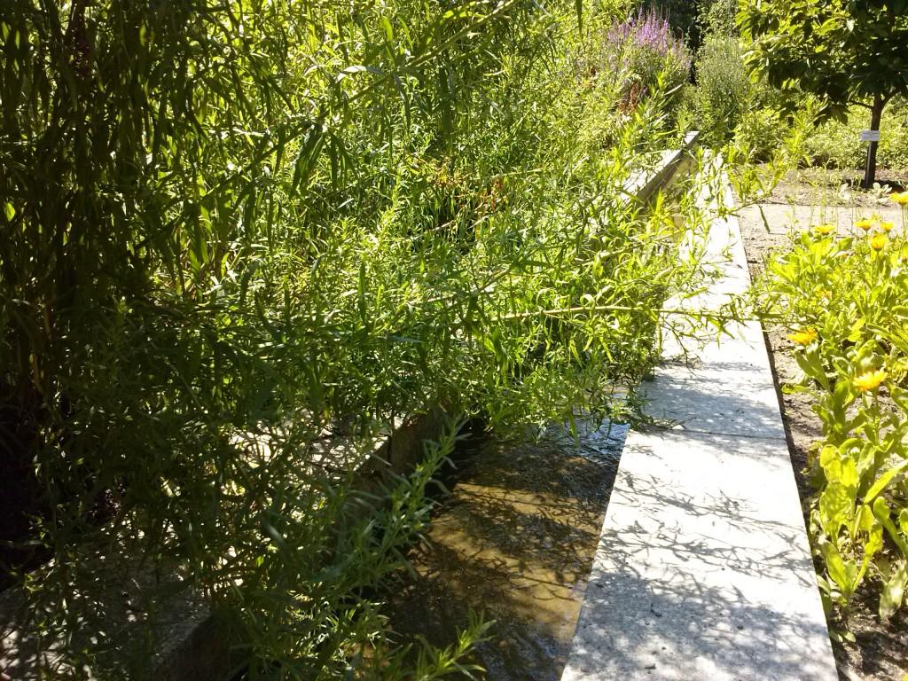 Wasseranlage im Apothekergarten